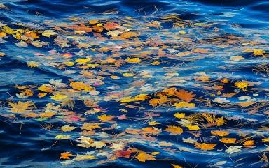 reka-ruchej-voda-listya-xvoya-osen